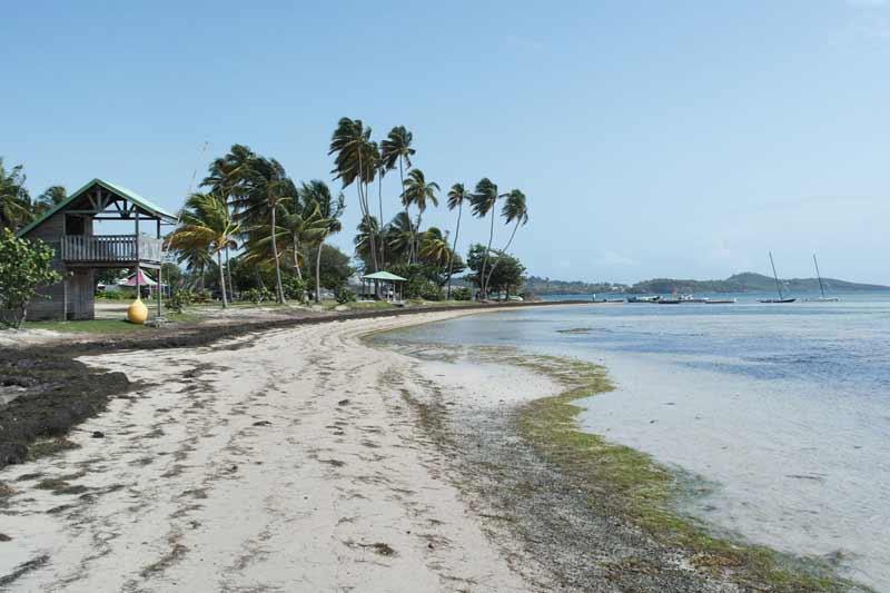 plage-palmiers-kitesurf-location-vacances-martinique-voyage-kitecamp-martinique