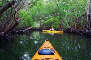 kayak activité nautique mangroves
