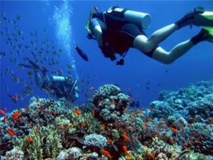 plongée sous marine faune marine
